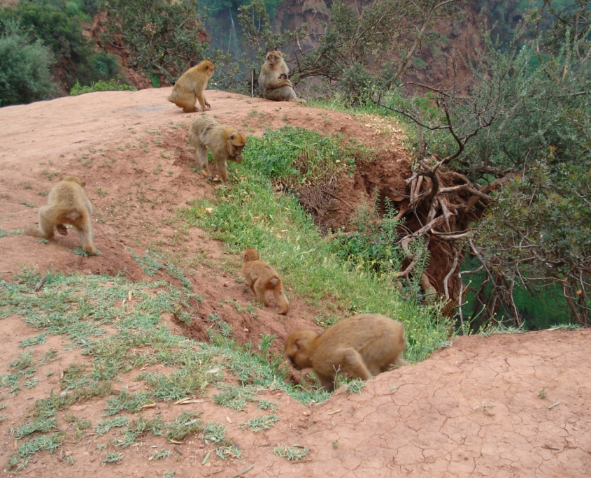 The Macaque's at The Cascades