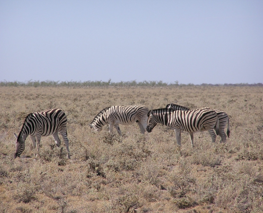 The Flight of The Zebras, Namibia